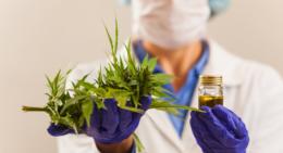 Fabricação e venda de medicamentos à base de Cannabis são aprovadas pela Anvisa(Foto: Secretaria de Saúde do RJ)