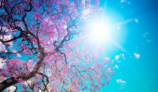 Primavera tem início nesta terça-feira (22); saiba como será a estação(Foto: Divulgação )